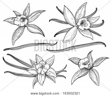 450x388 Vanilla Images, Illustrations, Vectors