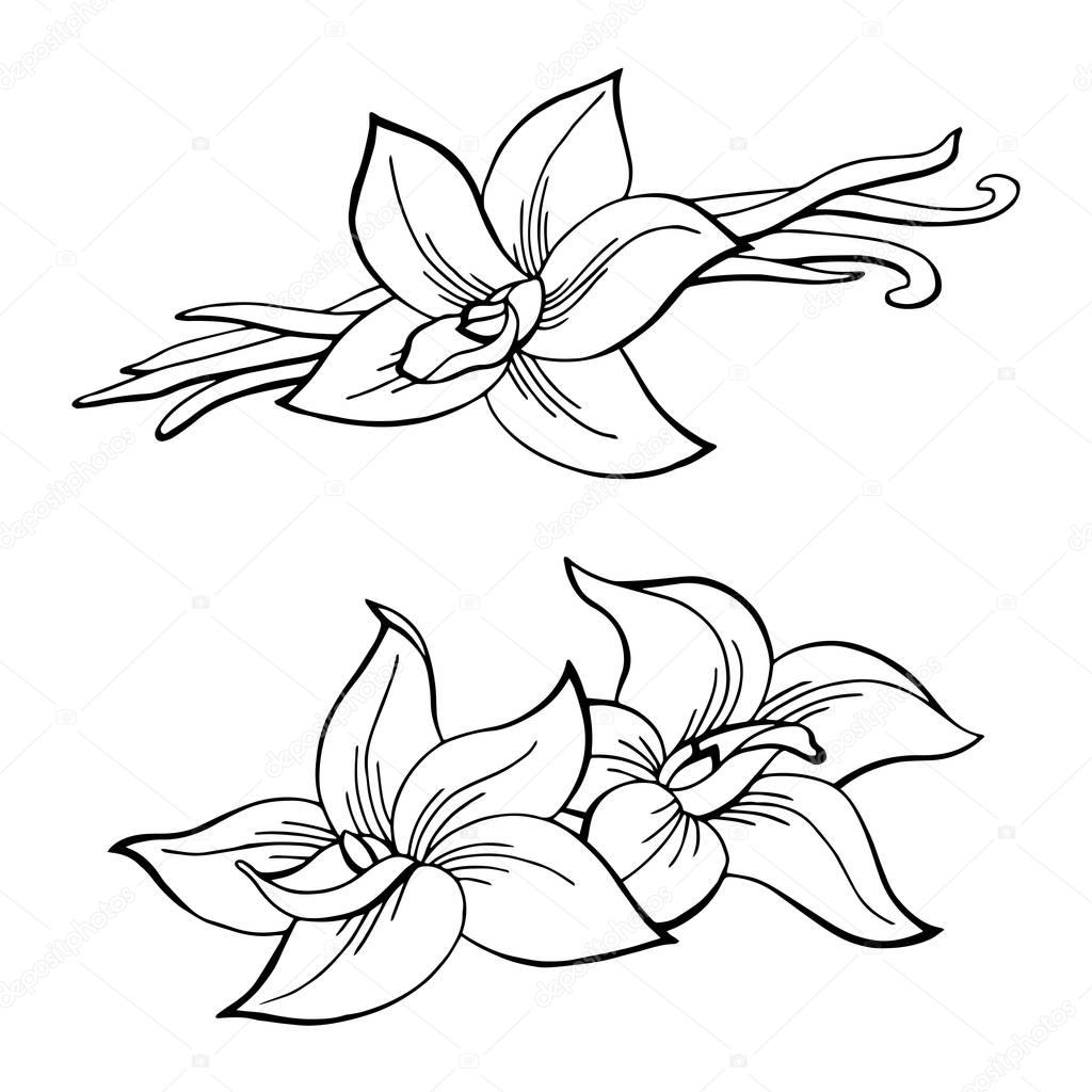 1024x1024 Vanilla Pod Flower Graphic Black White Isolated Sketch