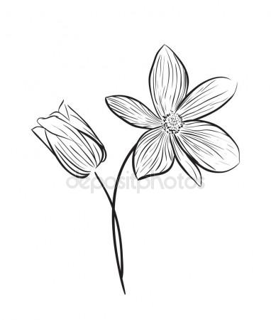 382x450 Vanilla Pods Or Sticks Hand Drawing Sketches Isolated On White