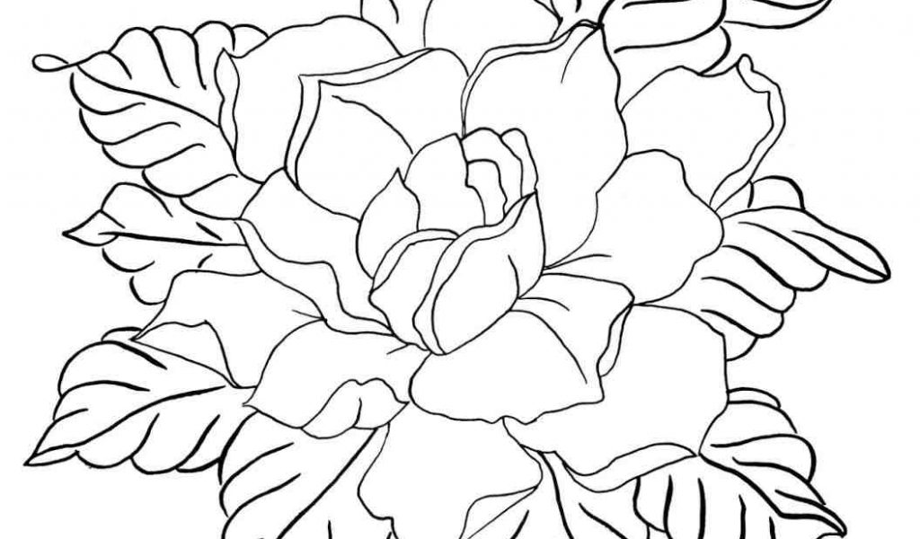 1024x600 The Images Collection Of Download Flower Drawing How To Draw