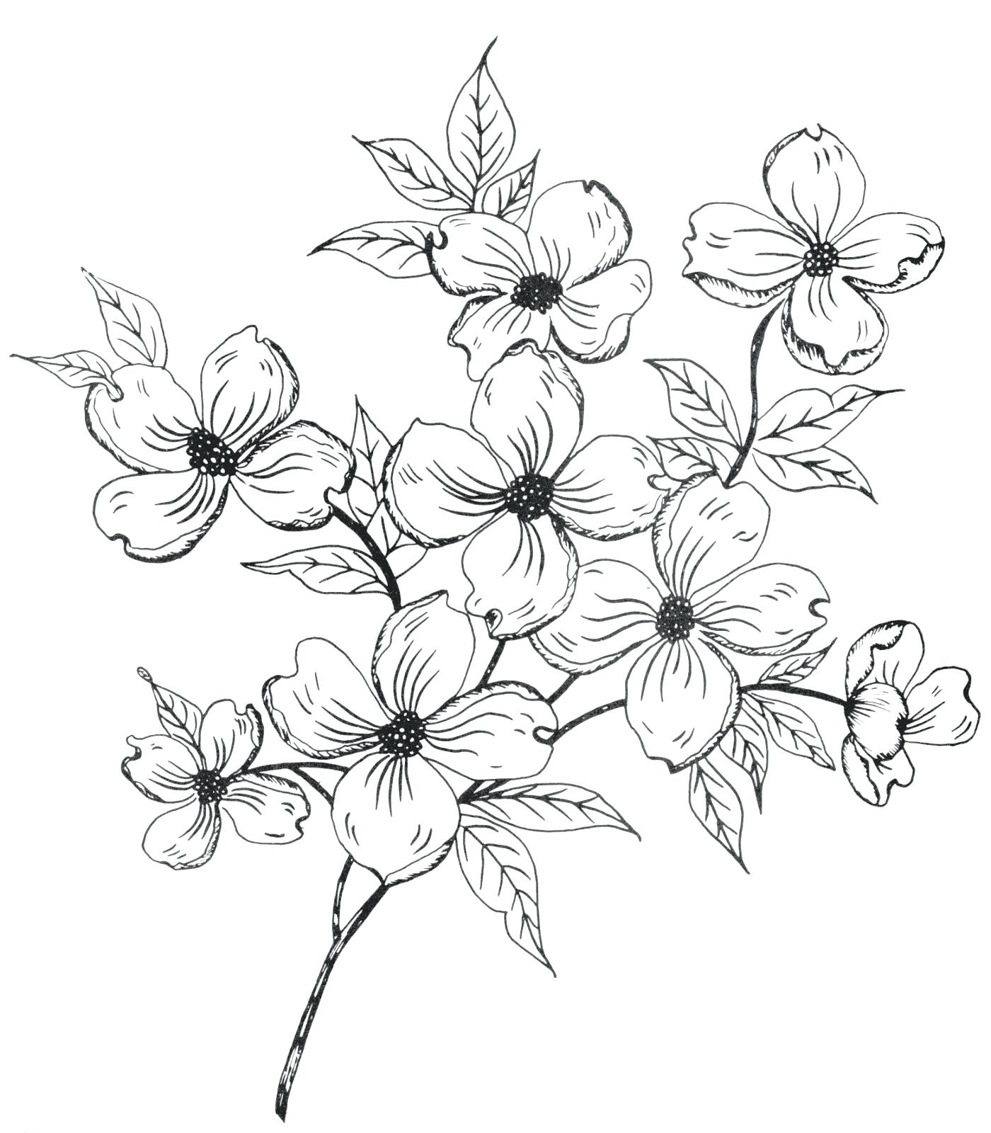 1400x1600 Coloring Pages Wonderful Flower Drawing Outline. Lily Flower