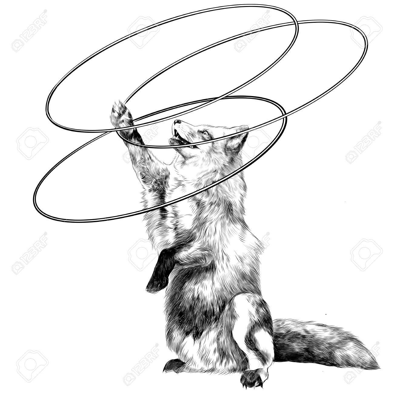 1300x1300 A Fox On Its Hind Legs At The Circus Twists Hoops Sketch Vector