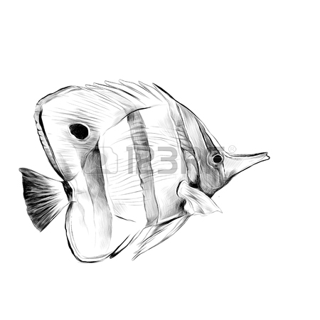 450x450 Atlantic Fish Shovel Sketch Vector Graphics Black And White