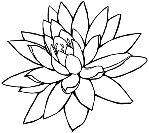 600x536 Lotus Clipart Line Drawing
