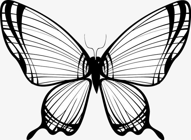 650x476 Simple Line Drawing Of A Butterfly Vector, Line, Draw, Butterfly