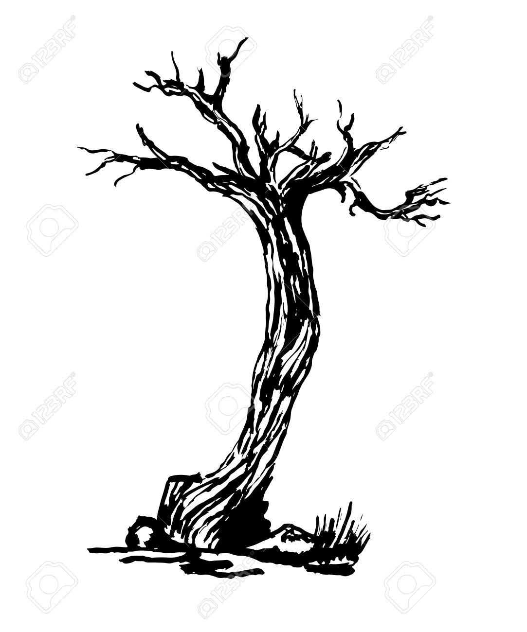 1083x1300 Drawing Old Dry Gnarled Tree Isolate Sketch Illustration Royalty