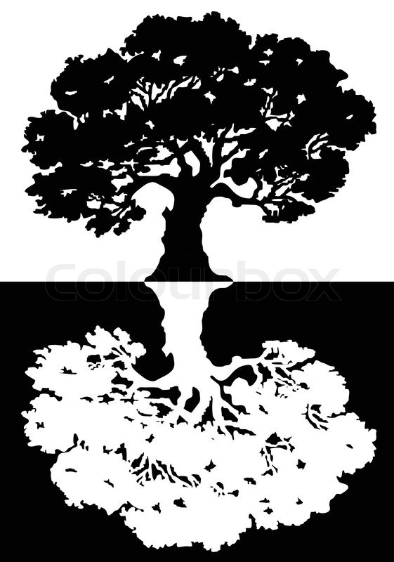 561x800 Two Black And White Trees Vector Stock Vector Colourbox