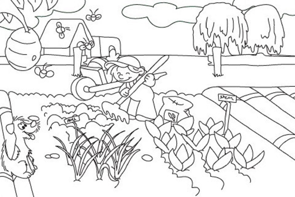 975x650 Vegetable Garden Coloring Pages Printable Food Pinterest