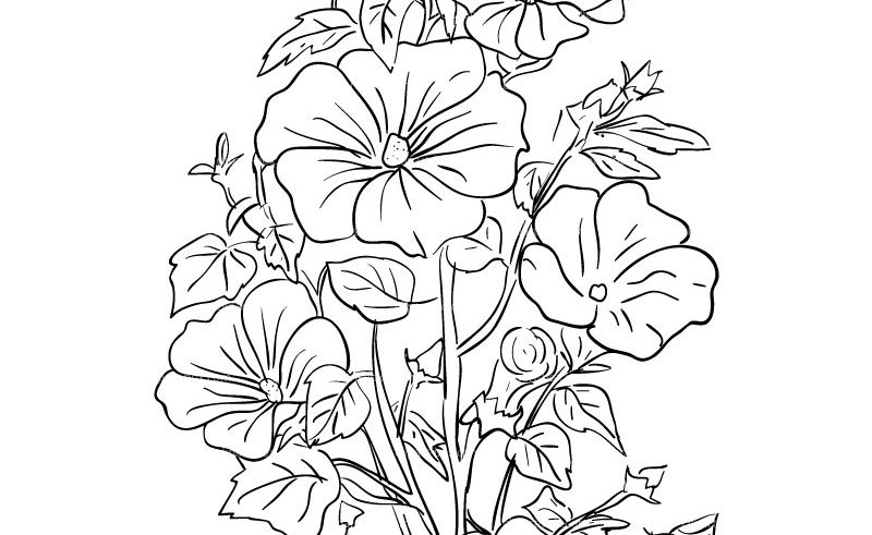 800x491 Outline Drawing Of A Basket Of Flowers Gardening Flower