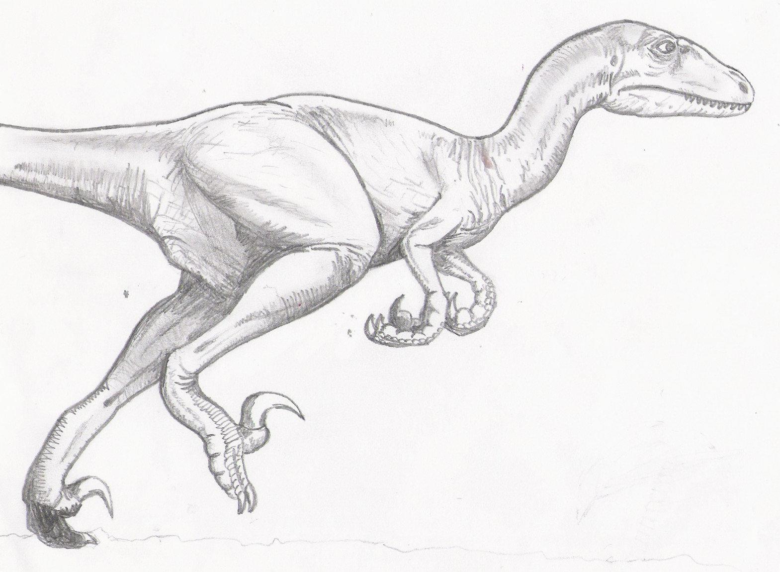 1569x1150 Velociraptor By Bsmd Ad