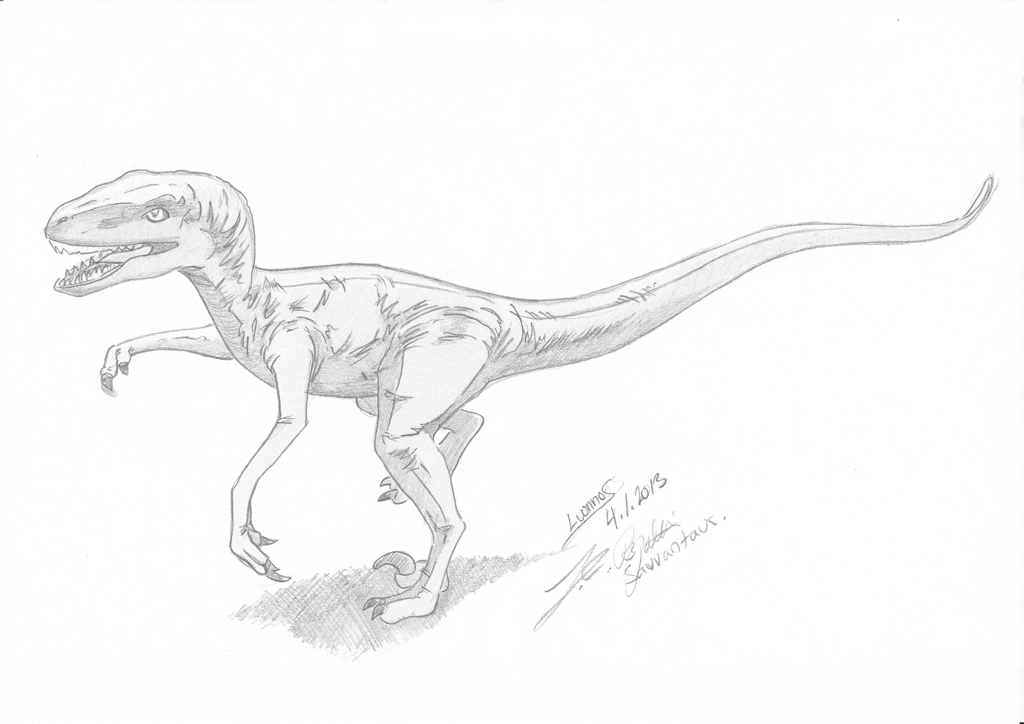 1024x724 Velociraptor Sketch By Chameleon Unwf