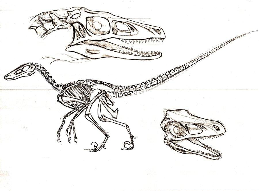 900x663 Velociraptor Study By Telera1701