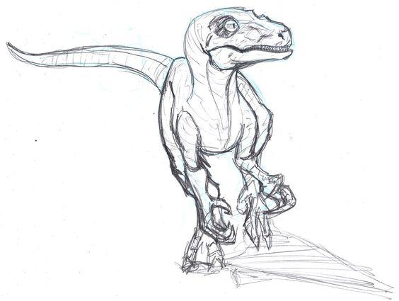 564x425 Velociraptor Drawing