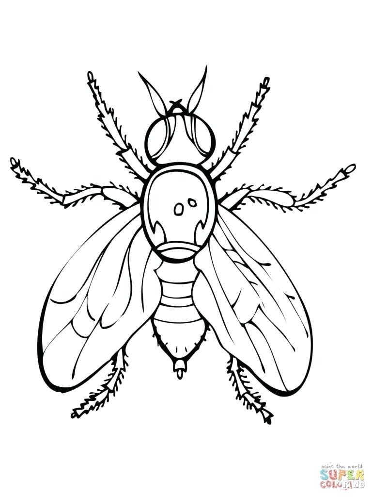 768x1024 Coloring Venus Fly Trap Coloring Page