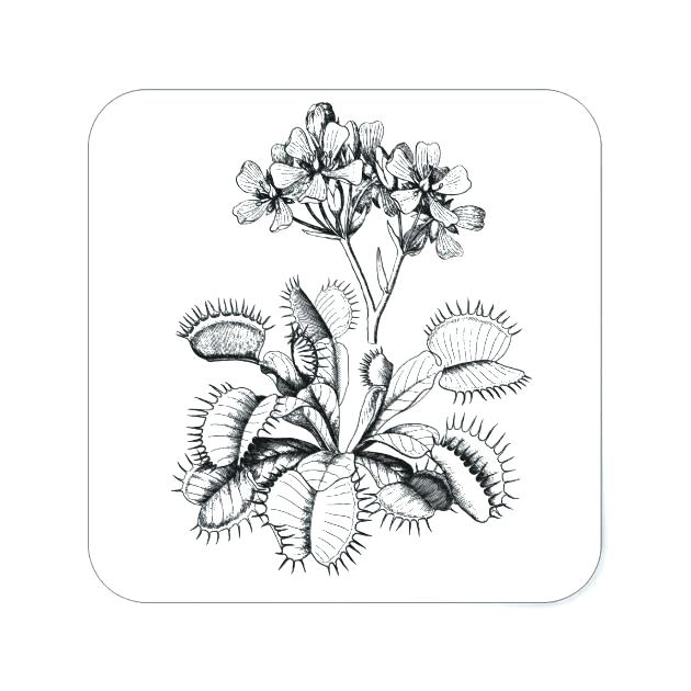 630x630 Venus Fly Trap Coloring Page Synthesis.site