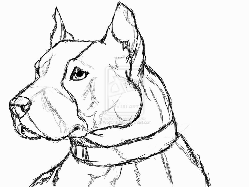 1024x768 Coloring Pages Of Pit Bulls Coloring Pages Pit