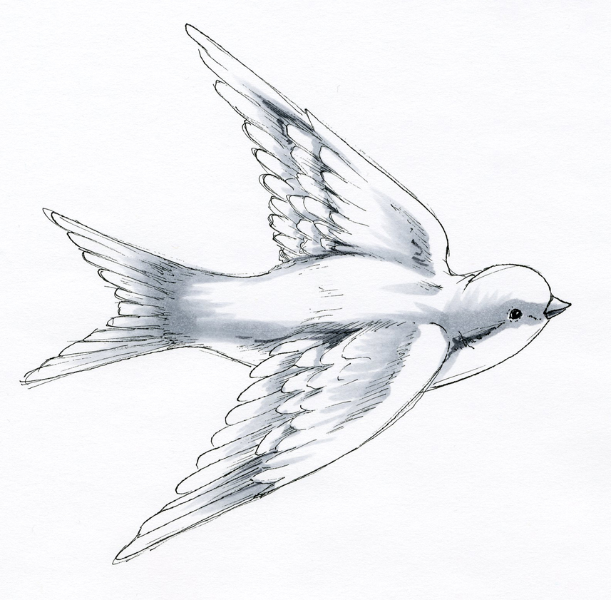 857x841 I Like Markers Coloring A Swallow