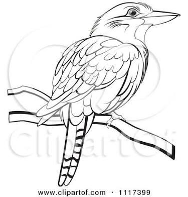 375x392 Victorian Drawing Kookaburra