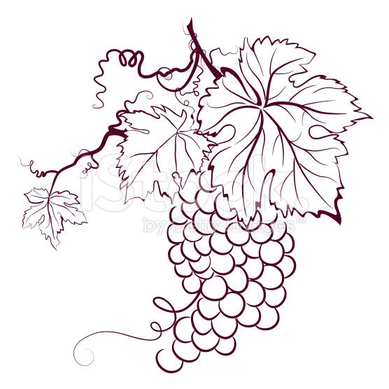 Vines And Leaves Drawing