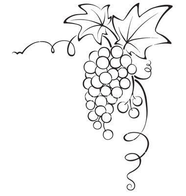 380x400 Drawn Fruit Grape Vine