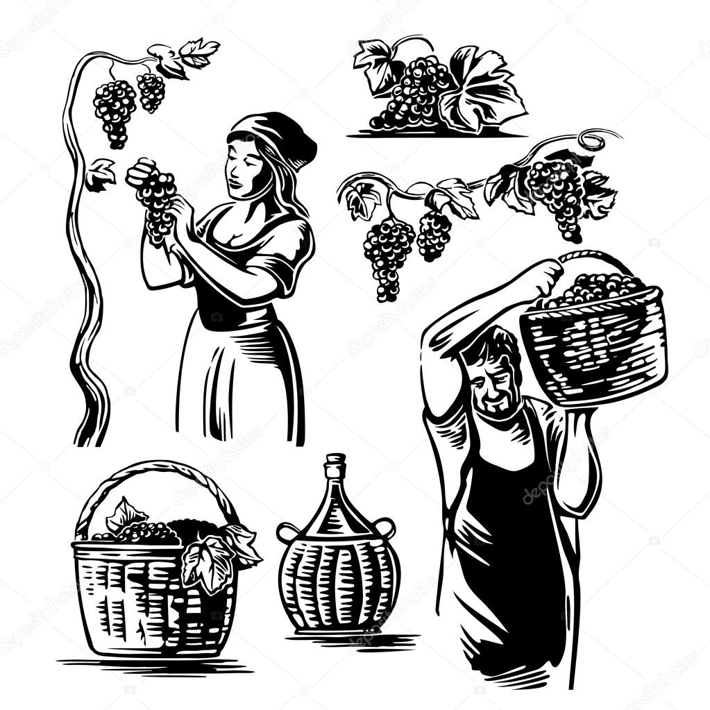 1023x1023 Men And Women Harvest The Grapes In The Vineyard. Stock Vector