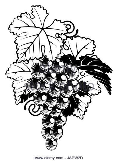 396x540 A Black White Drawing Vineyard Stock Photos Amp A Black