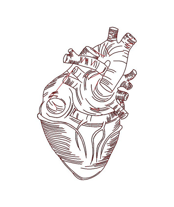 570x678 Anatomical Heart Embroidery Design. Real Heart 4x4 Hoop