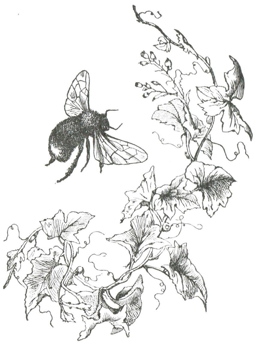900x1144 Bee Image Clip Art From Mcguffey's Reader Via