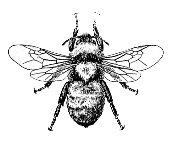 550x462 Bee Image And Dictionary Definition Dictionary Definitions