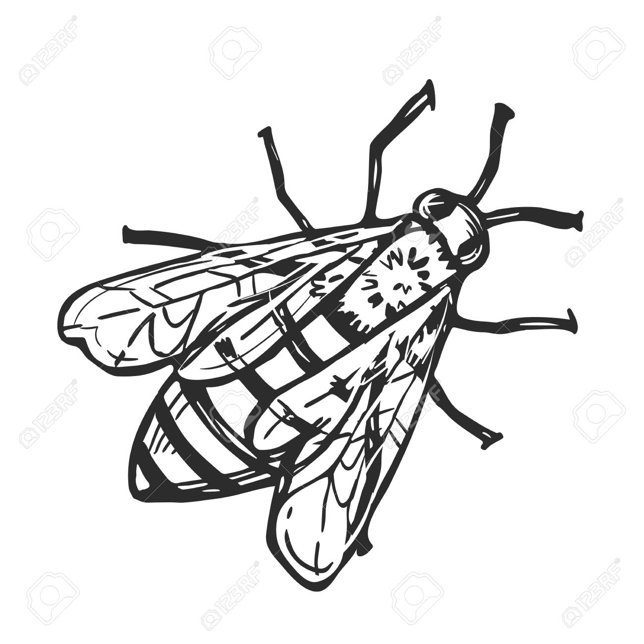 1300x1300 Honey Bee Freehand Pencil Drawing Isolated On White Background
