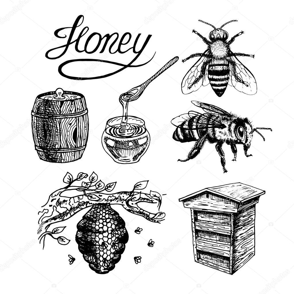 1024x1024 Honey Vintage Vector Set Stock Vector Airin.dizain