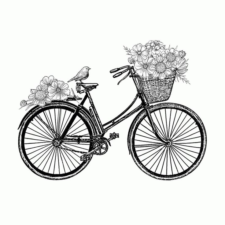 Bicycle Drawing At Getdrawings Com