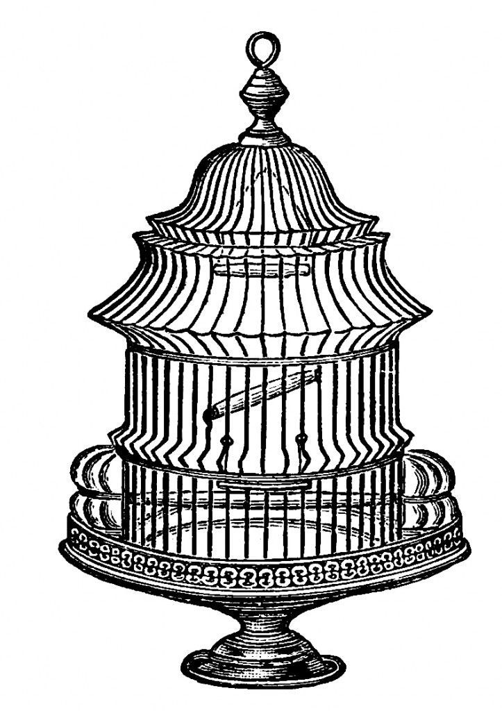 Vintage Birdcage Drawing