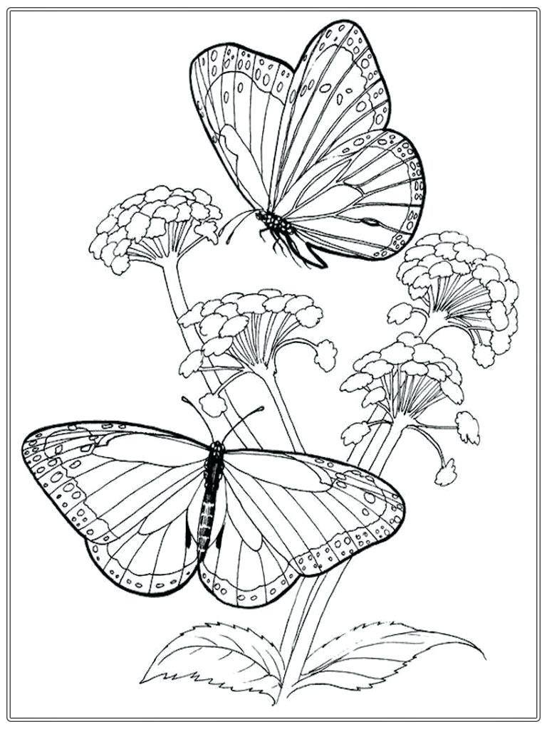 768x1024 Coloring Beautiful Butterfly Pages Butterflies Clip Art