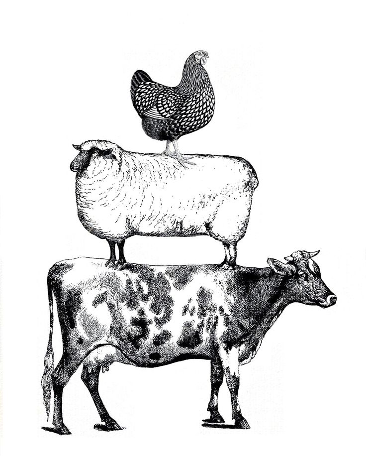 736x916 1167 Best Livestock Art Illustrations Woodblocks Drawings