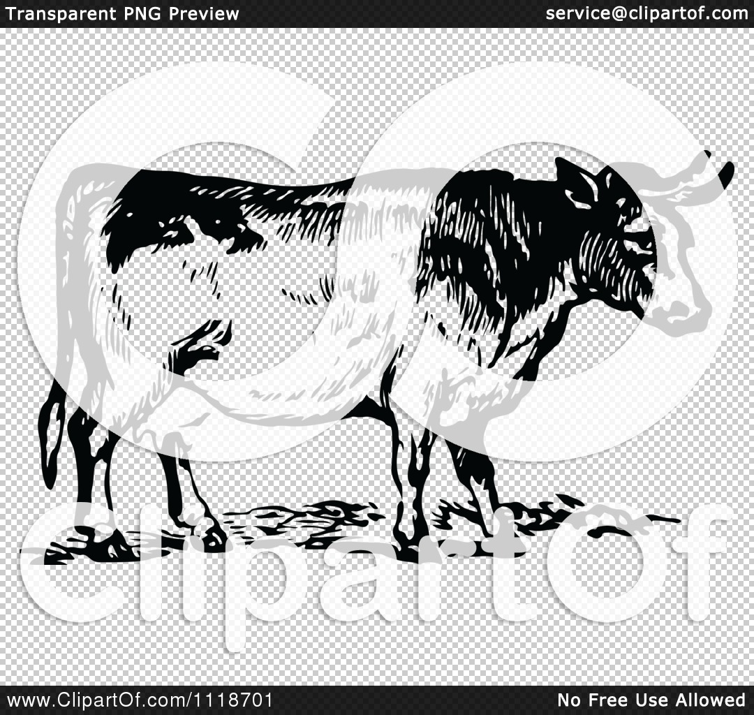 1080x1024 Clipart Of A Retro Vintage Black And White Cow 2