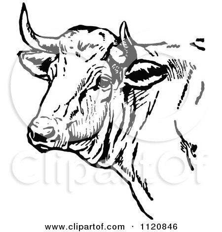 450x470 Clipart Of A Vintage Black And White Cow