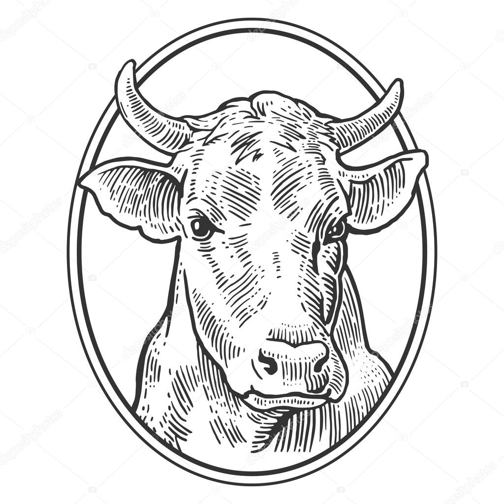 1024x1024 Cows Head. Hand Drawn In A Graphic Style. Vintage Vector Engraving