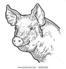220x229 Image Result For Vintage Cow Drawing Face Chicken, Pig, Cow