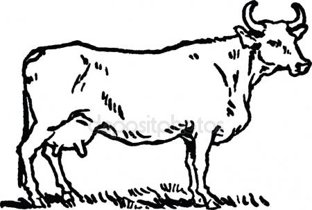 450x303 Vintage Drawing Cow Stock Photo