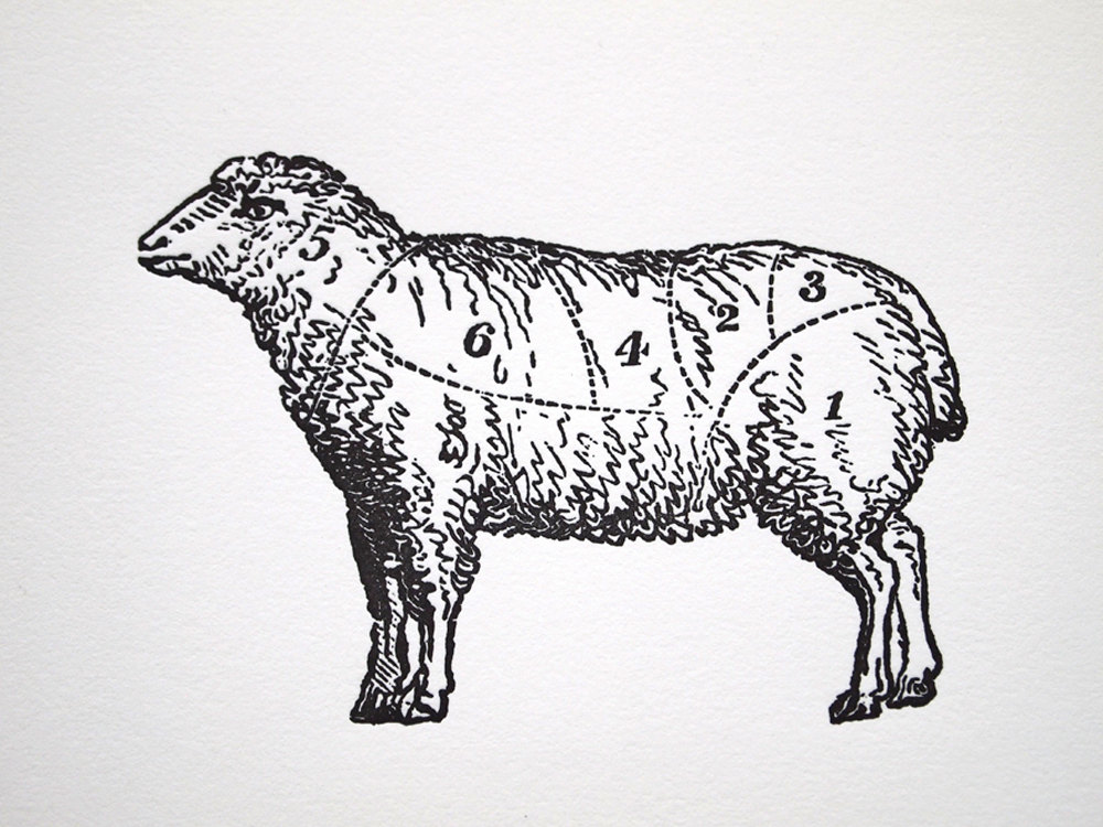 1000x750 Vintage Lamb Drawing