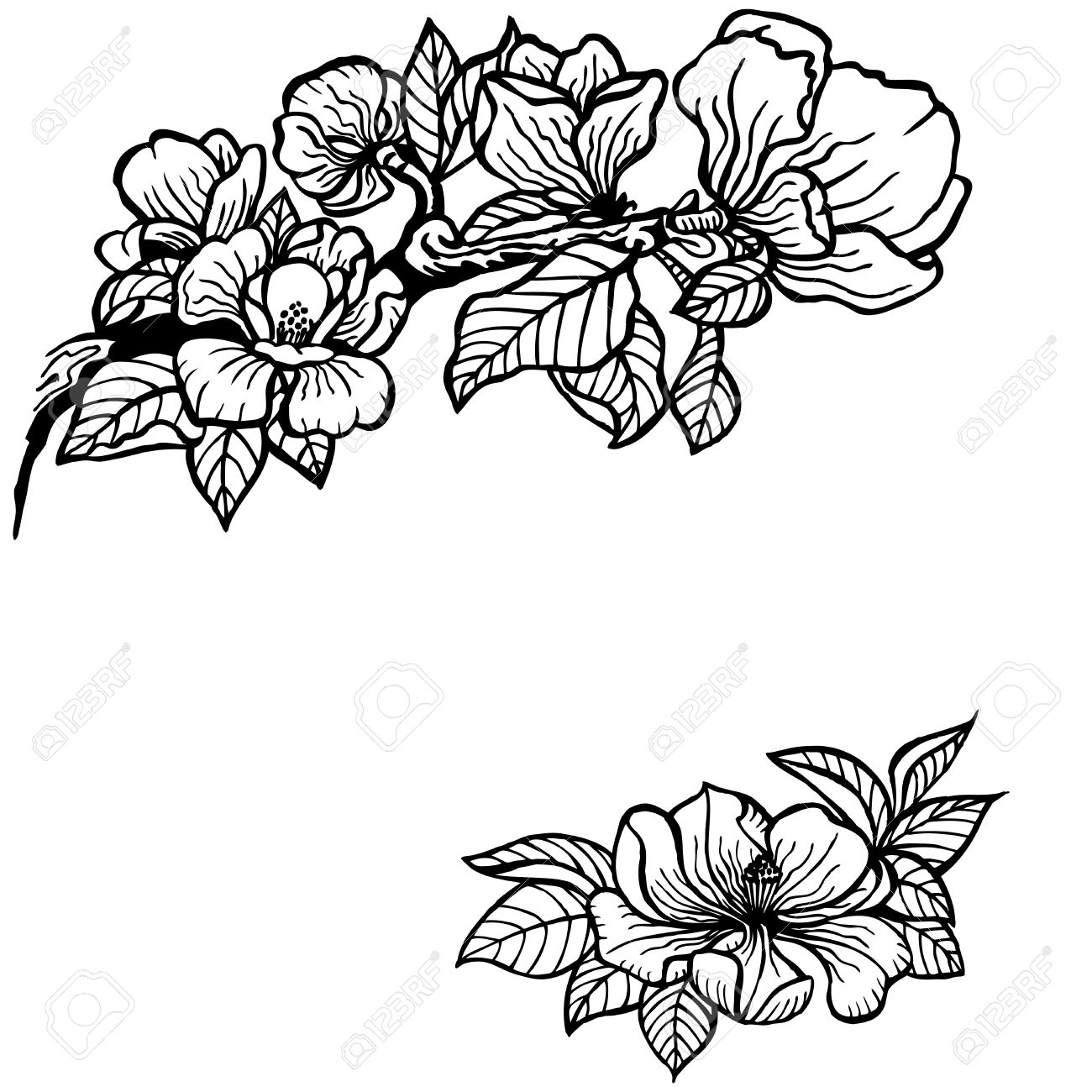 1300x1300 33740552 Twig Of Magnolia Flowers And Leaves Vintage Drawing