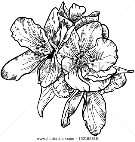 449x470 Vintage Flower Drawing Black And White