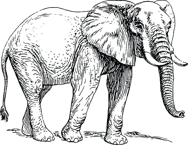 600x462 Elephant Coloring Pages Cute Elephant Coloring Pages Elephant