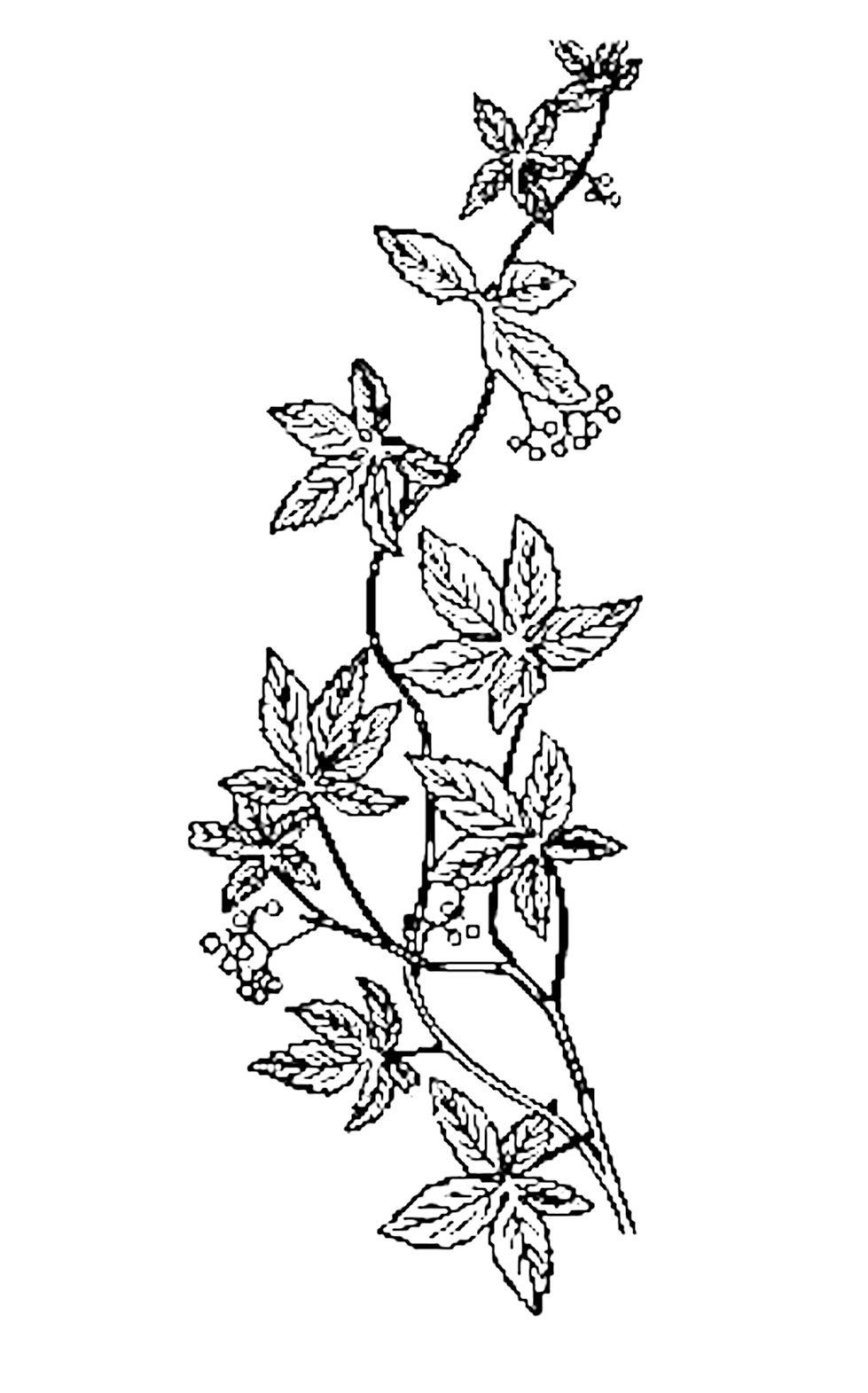 979x1571 Vintage Flower Clipart Line