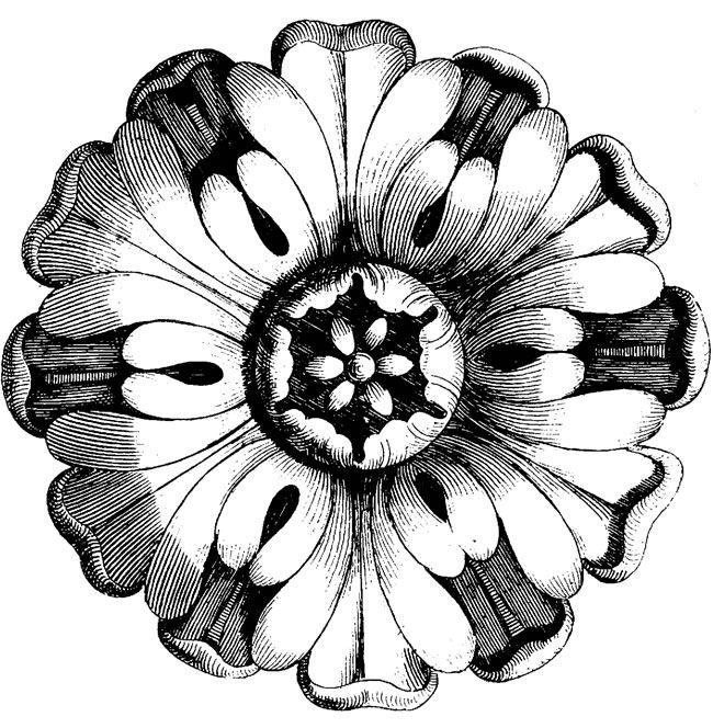 Vintage Flowers Drawing