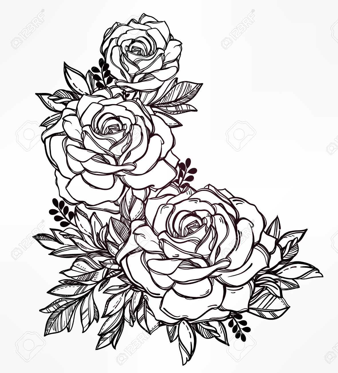 1181x1300 Vintage Floral Highly Detailed Hand Drawn Rose Flower Stem