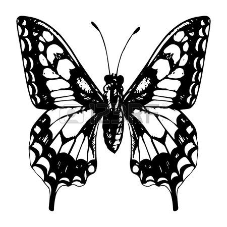 450x450 Butterflies Set, Hand Drawn Vintage Design Elements,, Line Drawing