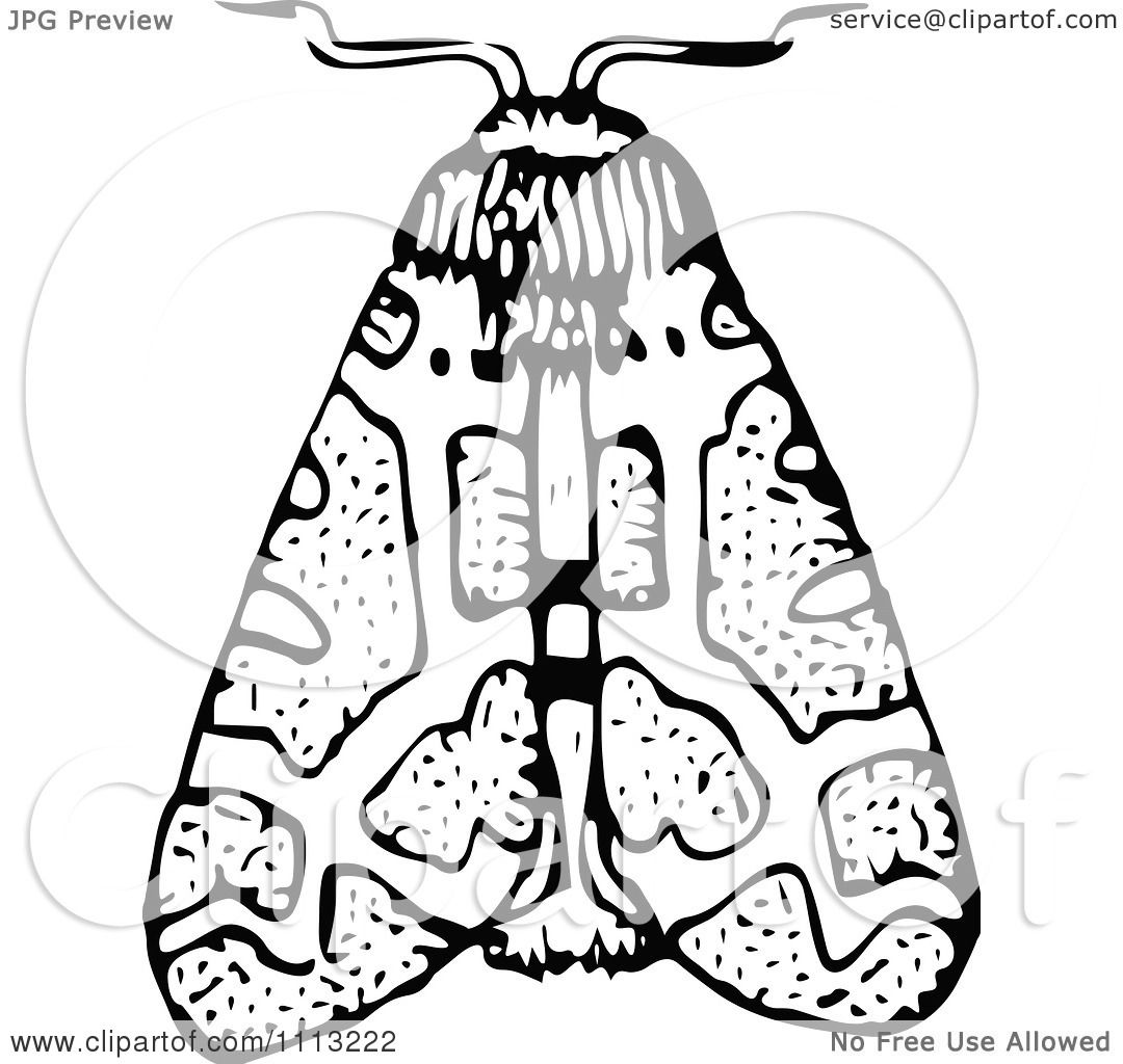 1080x1024 Clipart Vintage Black And White Moth