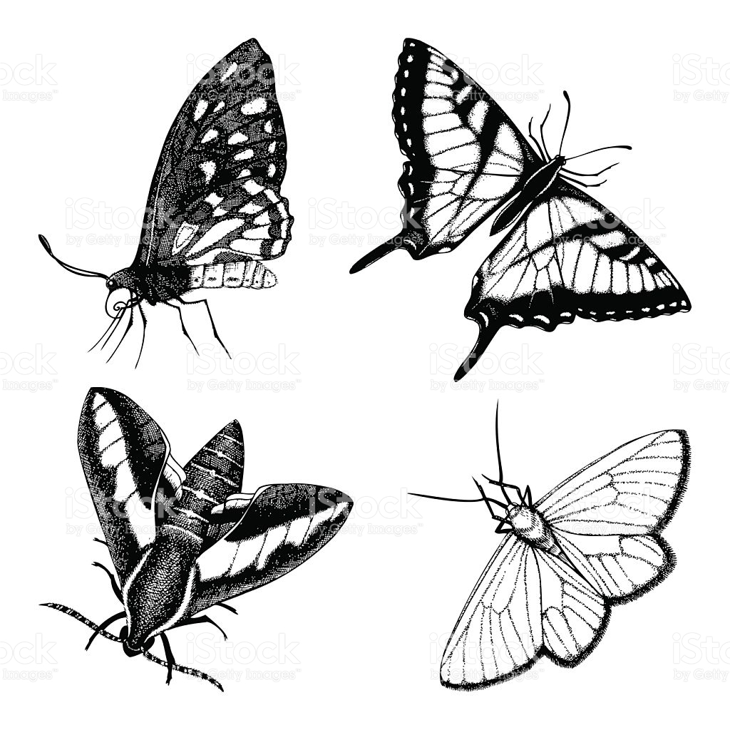 1024x1024 Drawn Moth Vintage